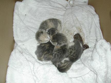babies!