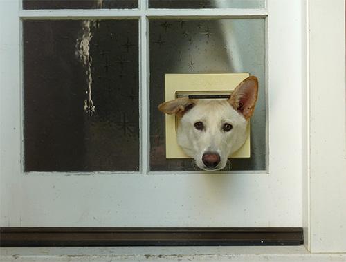 Hundi