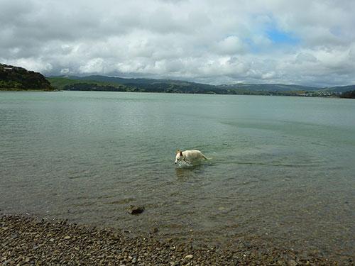 Schwimm-Hund