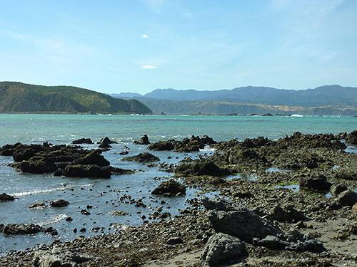 Wellington Bays