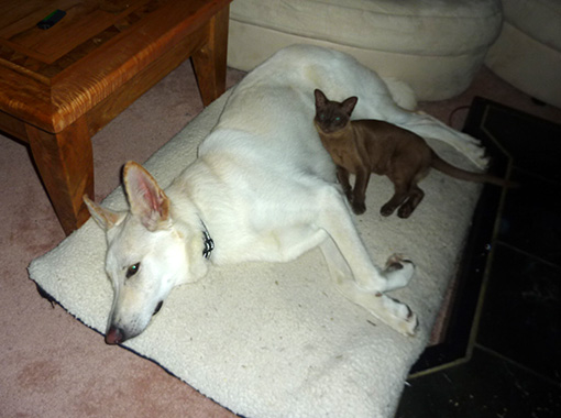 Hund und Katz