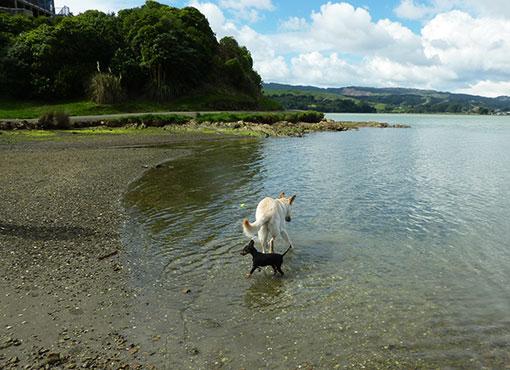 Hundis am Strand